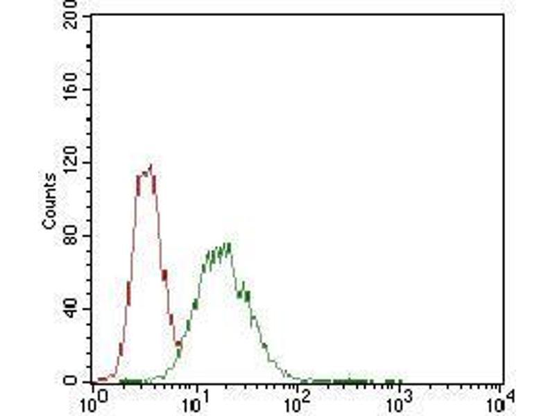 Image no. 1 for anti-Caudal Type Homeobox 2 (CDX2) (AA 176-303) antibody (ABIN1724921)