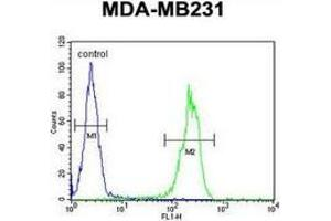 Flow Cytometry (FACS) image for anti-MYSM1 antibody (Myb-Like, SWIRM and MPN Domains 1) (N-Term) (ABIN953592)