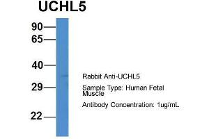 Image no. 2 for anti-Ubiquitin Carboxyl-terminal Hydrolase L5 (UCHL5) (C-Term) antibody (ABIN2788012)