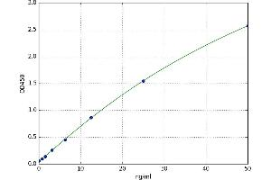 Image no. 1 for Cytochrome P450, Family 1, Subfamily B, Polypeptide 1 (CYP1B1) ELISA Kit (ABIN5523131)