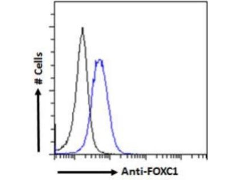 Flow Cytometry (FACS) image for anti-Forkhead Box C1 (FOXC1) (C-Term) antibody (ABIN249940)
