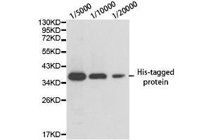 Image no. 1 for anti-His Tag antibody (ABIN3020556)