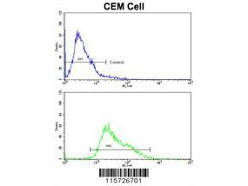 Flow Cytometry (FACS) image for anti-Anti-Mullerian Hormone Receptor, Type II (AMHR2) (AA 374-402), (C-Term) antibody (ABIN391175)