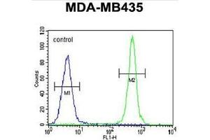 Image no. 1 for anti-AlkB, Alkylation Repair Homolog 6 (E. Coli) (ALKBH6) (AA 123-153), (Middle Region) antibody (ABIN950353)