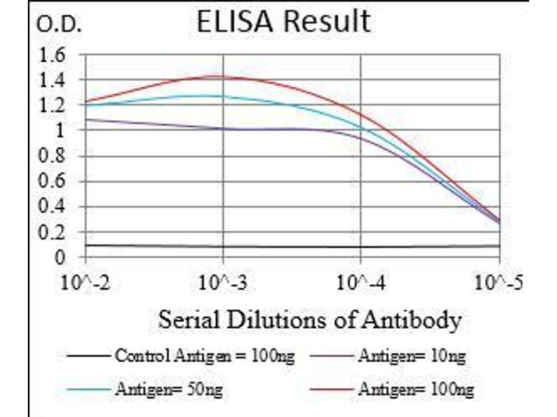 Image no. 1 for anti-gamma-aminobutyric Acid (GABA) B Receptor, 2 (GABBR2) (AA 319-483) antibody (ABIN1724937)