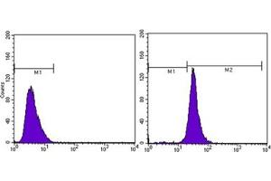 Flow Cytometry (FACS) image for anti-Actin, beta (ACTB) antibody (ABIN1105239)