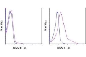 image for anti-ICOS antibody (Inducible T-Cell Co-Stimulator)  (FITC) (ABIN473750)