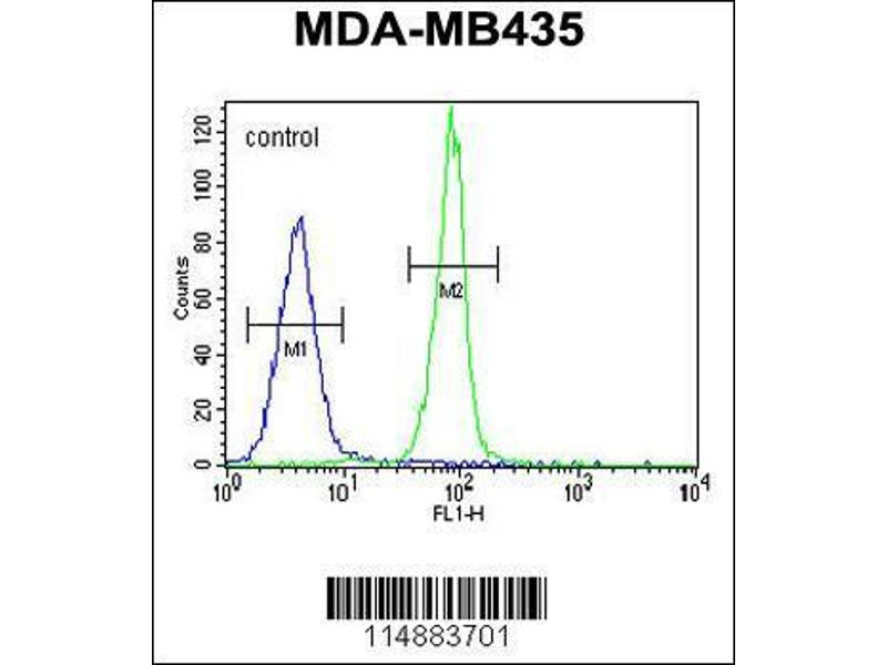 Flow Cytometry (FACS) image for anti-Caspase 3 antibody (Caspase 3, Apoptosis-Related Cysteine Peptidase) (AA 219-248) (ABIN655271)