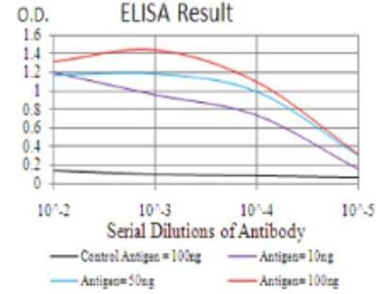 ELISA image for anti-Bone Morphogenetic Protein 2 (BMP2) antibody (ABIN4284894)