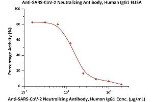 Image no. 2 for anti-SARS-CoV-2 Spike S1 (RBD) antibody (ABIN6952616)