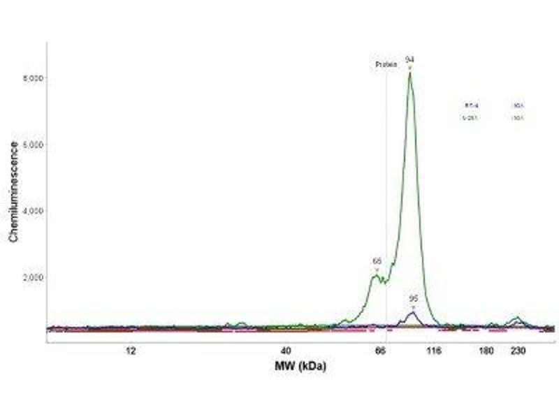 Simple Western (SimWes) image for anti-Adenosine Deaminase, RNA-Specific, B1 (ADARB1) antibody (ABIN4349794)