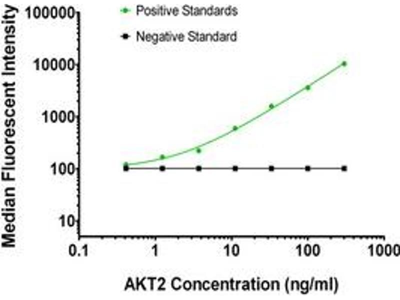 Luminex Assay (LMNX) image for anti-AKT2 antibody (V-Akt Murine Thymoma Viral Oncogene Homolog 2) (ABIN2672312)