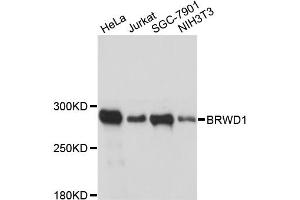Image no. 1 for anti-Bromodomain and WD Repeat Domain Containing 1 (BRWD1) antibody (ABIN6567606)