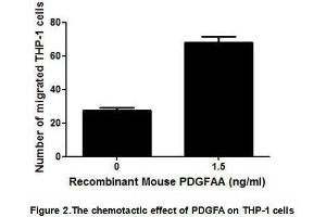 Image no. 2 for Platelet-Derived Growth Factor alpha Polypeptide (PDGFA) (AA 94-194) (Active) protein (His tag) (ABIN6239819)
