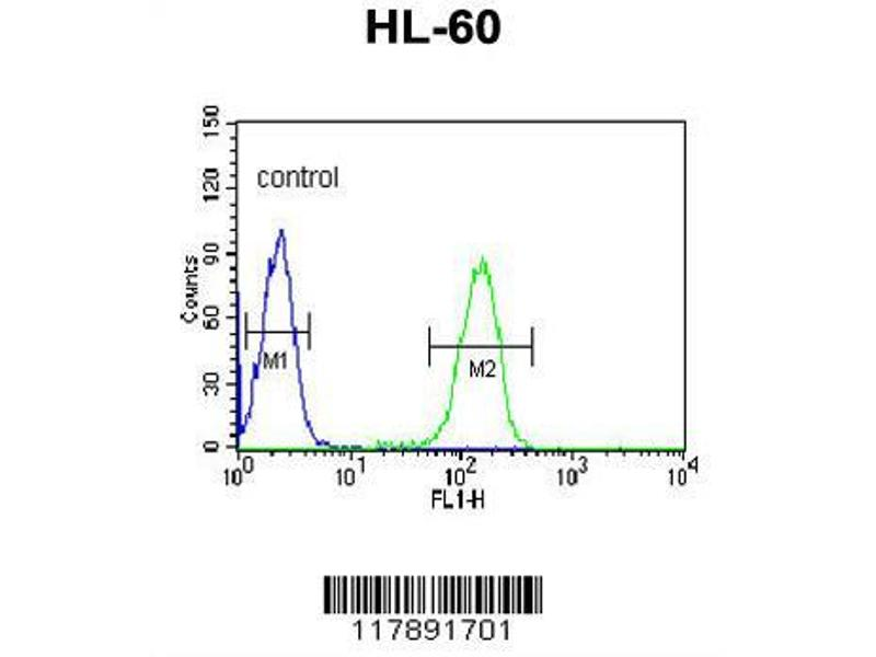 Flow Cytometry (FACS) image for anti-PLVAP antibody (Plasmalemma Vesicle Associated Protein) (AA 214-242) (ABIN653326)
