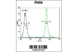 Image no. 4 for anti-Additional Sex Combs Like 1 (ASXL1) (Center) antibody (ABIN2159311)