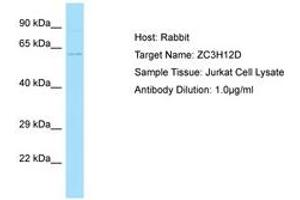 Image no. 1 for anti-Zinc Finger CCCH-Type Containing 12D (ZC3H12D) (AA 389-438) antibody (ABIN6750025)