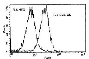 Flow Cytometry (FACS) image for anti-BCL2L1 antibody (BCL2-Like 1) (ABIN371611)