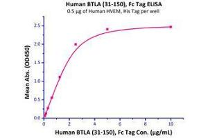 Image no. 1 for B and T Lymphocyte Associated (BTLA) (AA 31-150) (Active) protein (Fc Tag) (ABIN2870806)