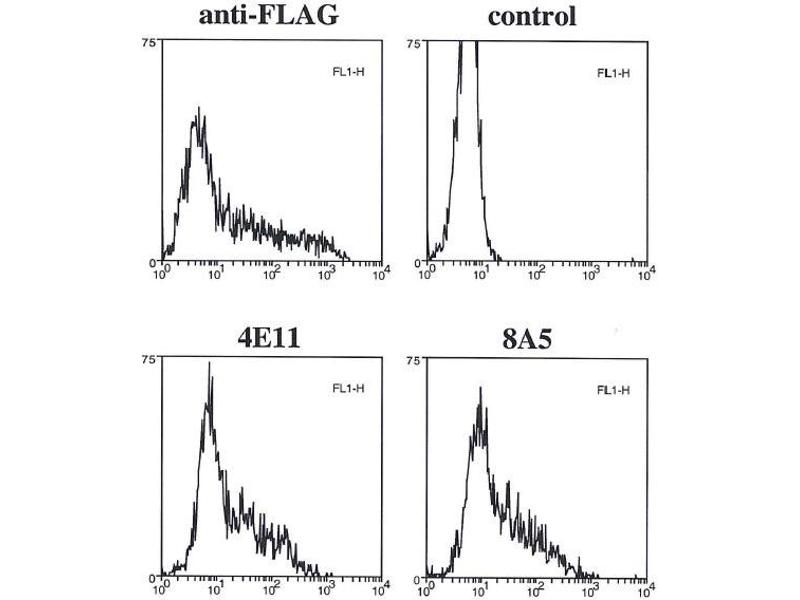 Flow Cytometry (FACS) image for anti-Caspase 4 antibody (Caspase 4, Apoptosis-Related Cysteine Peptidase) (ABIN2745522)