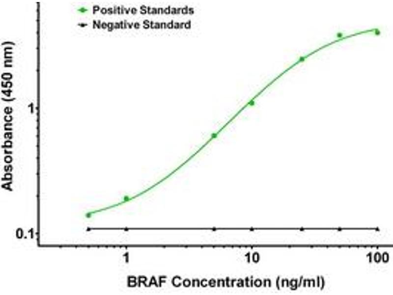 ELISA image for anti-BRAF antibody (V-Raf Murine Sarcoma Viral Oncogene Homolog B1) (ABIN2672313)