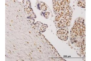 Image no. 1 for anti-Testis-Specific Kinase 2 (TESK2) (AA 405-542) antibody (ABIN599135)