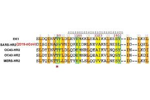 Image no. 1 for SARS-CoV-2 Spike peptide (Cy5) (ABIN6952487)