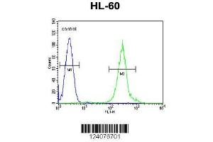 Image no. 3 for anti-Fanconi Anemia, Complementation Group C (FANCC) (AA 527-555), (C-Term) antibody (ABIN653475)
