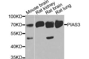Western Blotting (WB) image for anti-PIAS3 antibody (Protein Inhibitor of Activated STAT, 3) (ABIN2564532)