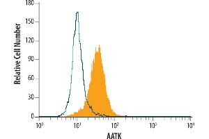 Flow Cytometry (FACS) image for anti-AATK Antikörper (Apoptosis-Associated tyrosine Kinase) (AA 421-589) (ABIN4900335)