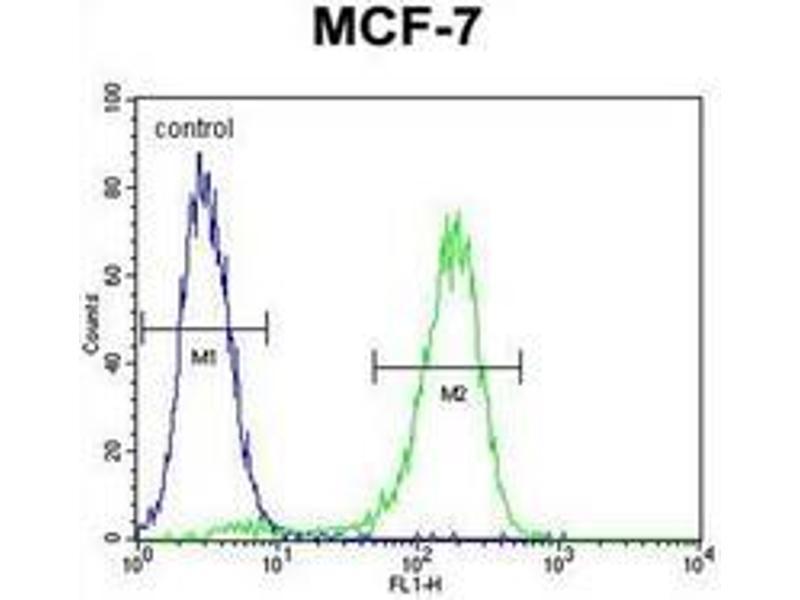 Flow Cytometry (FACS) image for anti-RARS antibody (Arginyl-tRNA Synthetase) (AA 612-642) (ABIN954456)