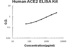 Image no. 1 for Angiotensin I Converting Enzyme 2 (ACE2) ELISA Kit (ABIN6720210)