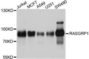 Image no. 1 for anti-RAS Guanyl Releasing Protein 1 (Calcium and DAG-Regulated) (RASGRP1) antibody (ABIN6146720)