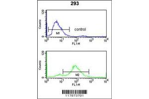 Flow Cytometry (FACS) image for anti-Transportin 1 antibody (TNPO1) (N-Term) (ABIN2497320)