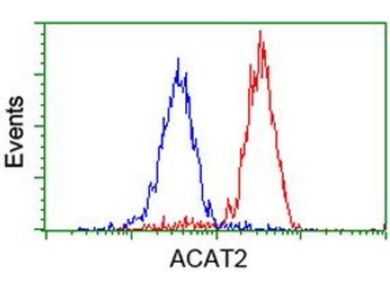 Image no. 10 for anti-Acetyl-CoA Acetyltransferase 2 (ACAT2) antibody (ABIN1496396)