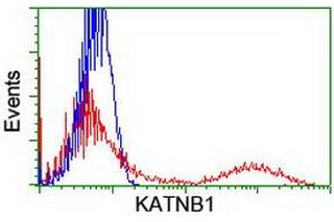 image for anti-KATNB1 antibody (Katanin P80 (WD Repeat Containing) Subunit B 1) (ABIN1498986)