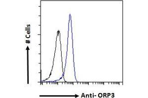 Image no. 1 for anti-Oxysterol Binding Protein-Like 3 (OSBPL3) (N-Term) antibody (ABIN334453)