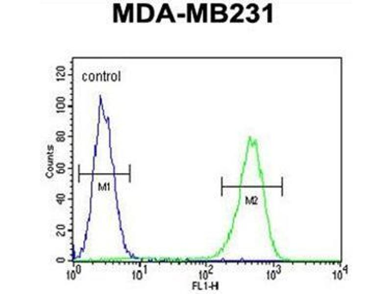 Flow Cytometry (FACS) image for anti-AMACR antibody (alpha-Methylacyl-CoA Racemase) (AA 330-359) (ABIN950388)