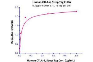 Image no. 3 for Cytotoxic T-Lymphocyte-Associated Protein 4 (CTLA4) (AA 37-162) (Active) protein (Strep Tag) (ABIN6810026)