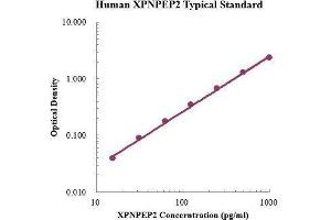 Image no. 1 for X-Prolyl Aminopeptidase (Aminopeptidase P) 2, Membrane-Bound (XPNPEP2) ELISA Kit (ABIN3199236)