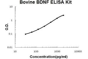 Image no. 1 for Brain-Derived Neurotrophic Factor (BDNF) ELISA Kit (ABIN5510518)