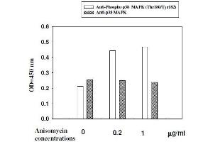 Image no. 5 for Mitogen-Activated Protein Kinase 14 (MAPK14) ELISA Kit (ABIN1981835)