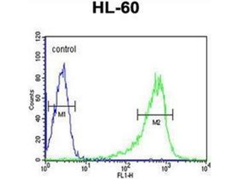Flow Cytometry (FACS) image for anti-phospholipase C, beta 1 (phosphoinositide-Specific) (PLCB1) (AA 1155-1184), (C-Term) antibody (ABIN954182)