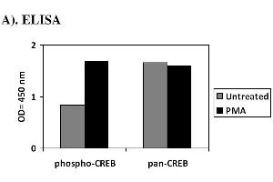 Image no. 1 for cAMP Responsive Element Binding Protein 1 (CREB1) ELISA Kit (ABIN1981714)