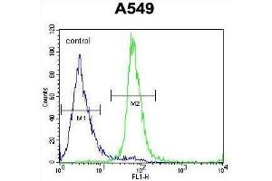 Image no. 3 for anti-Zinc Finger Protein 324B (ZNF324B) (AA 514-543), (C-Term) antibody (ABIN955704)