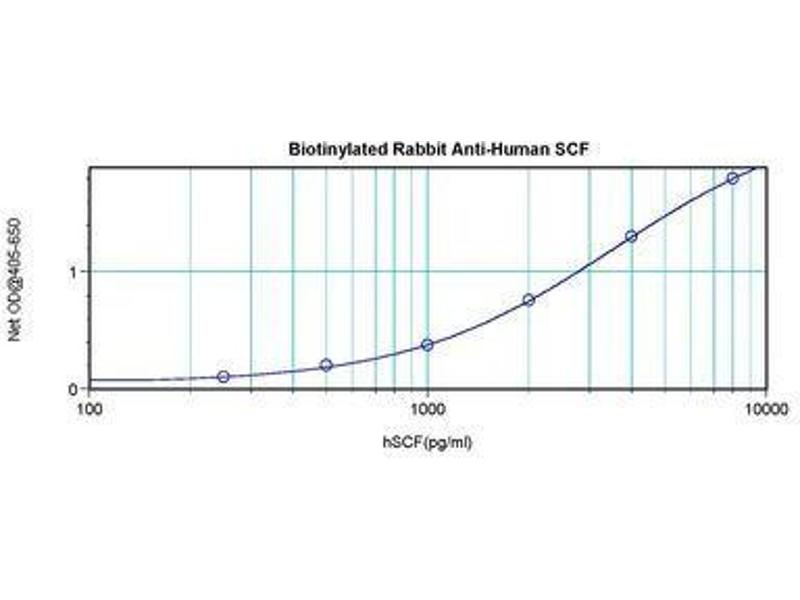 image for anti-KIT Ligand antibody (KITLG)  (Biotin) (ABIN465584)