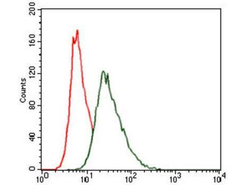 Flow Cytometry (FACS) image for anti-Heat Shock Transcription Factor 4 (HSF4) antibody (ABIN1843863)