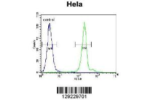 Flow Cytometry (FACS) image for anti-APG7L-D555 (PEI 1:100)b (AA 540-569) antibody (ABIN655142)
