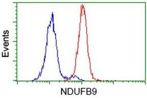 Image no. 2 for anti-NADH Dehydrogenase (Ubiquinone) 1 beta Subcomplex, 9, 22kDa (NDUFB9) (AA 3-179) antibody (ABIN2727035)