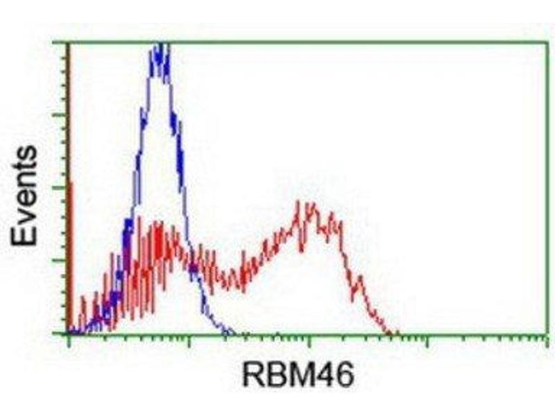 Flow Cytometry (FACS) image for anti-RNA Binding Motif Protein 46 (RBM46) antibody (ABIN4349627)